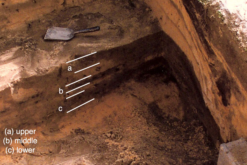 is radiocarbon dating expensive Radiocarbon dating  are you looking for an overview of the radiocarbon method there are many helpful sites on the internet here are just a few:.